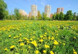 Реутов стал самым чистым и благоустроенным городом Подмосковья