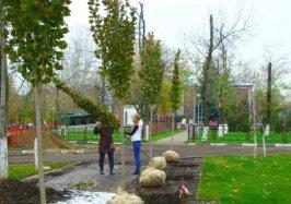 В Реутове пройдут масштабные высадки деревьев